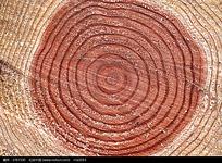 树木年轮贴图图片