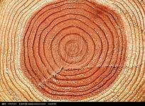 树木圆环年轮图片