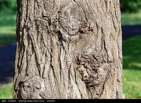 树皮纹理贴图图片