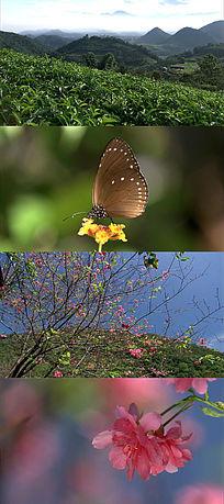 漫山遍野春色与桃花实拍素材