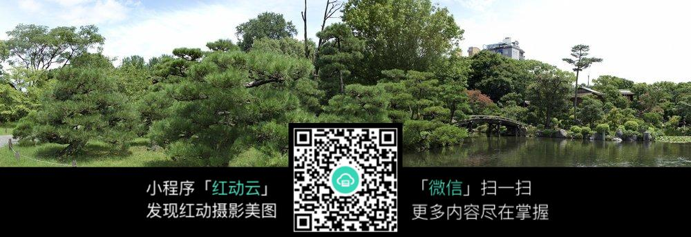 河边的树木风景图片