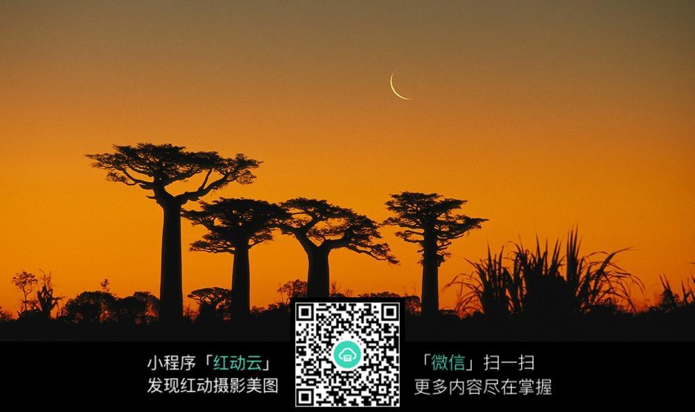 傍晚的天空和四棵树分拨区设计图图片