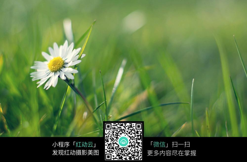 免费素材 图片素材 自然风光 自然风景 草丛中的野花  请您分享: 素材