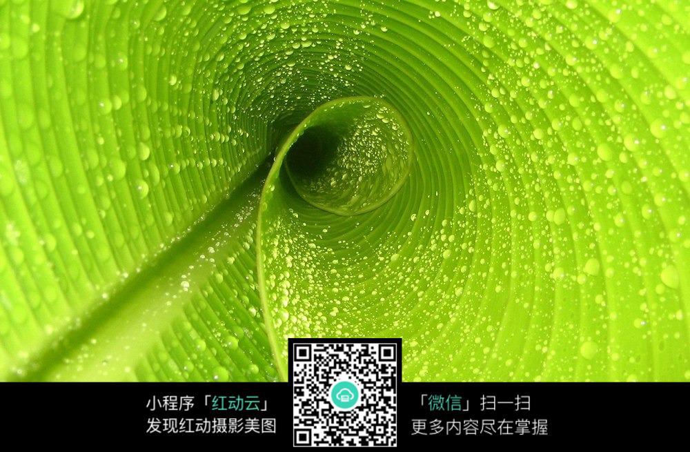 绿色植物的叶脉