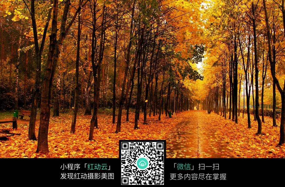 秋季落叶美景图