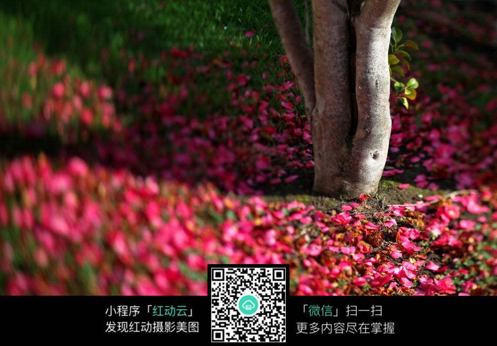 花瓣上的树根特写图片免费下载 编号4597258 红动网