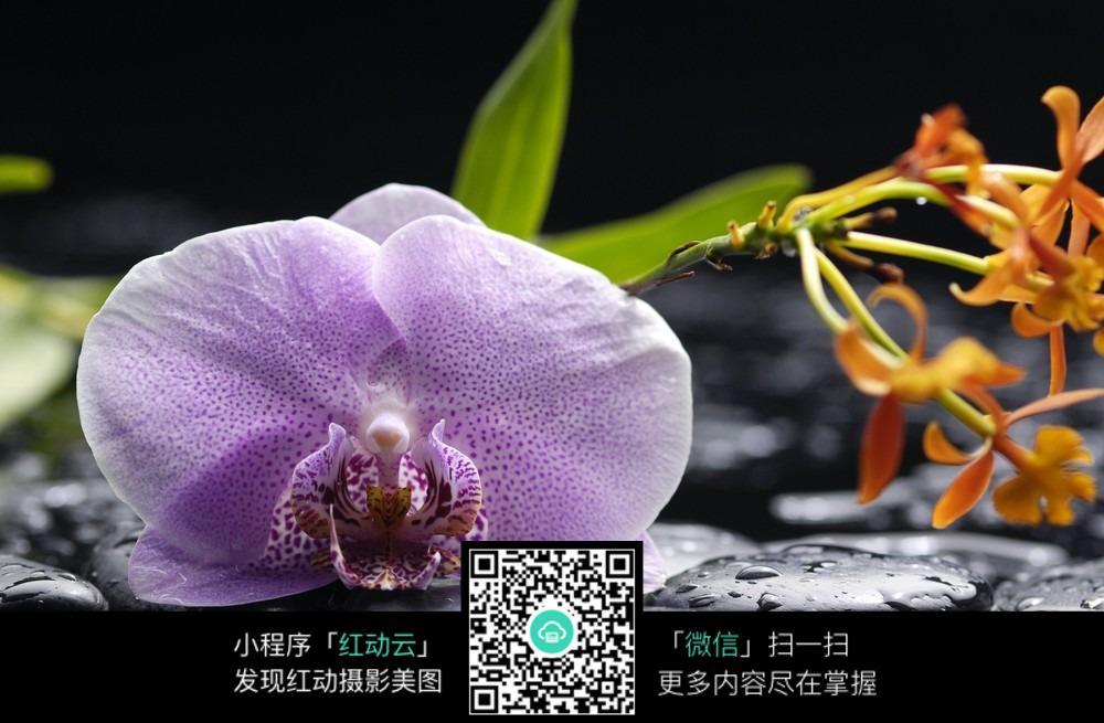 蝴蝶兰花朵图片_自然风景图片