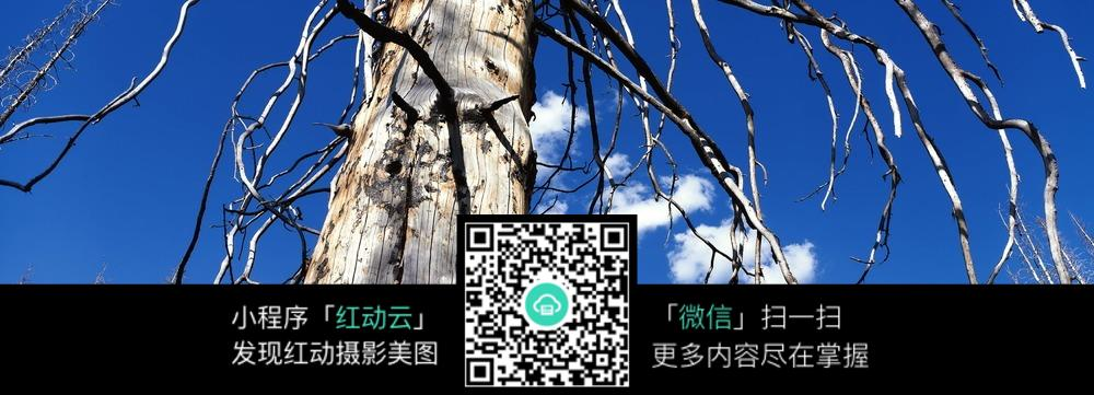 免费素材 图片素材 自然风光 自然风景 蓝天下的枯树