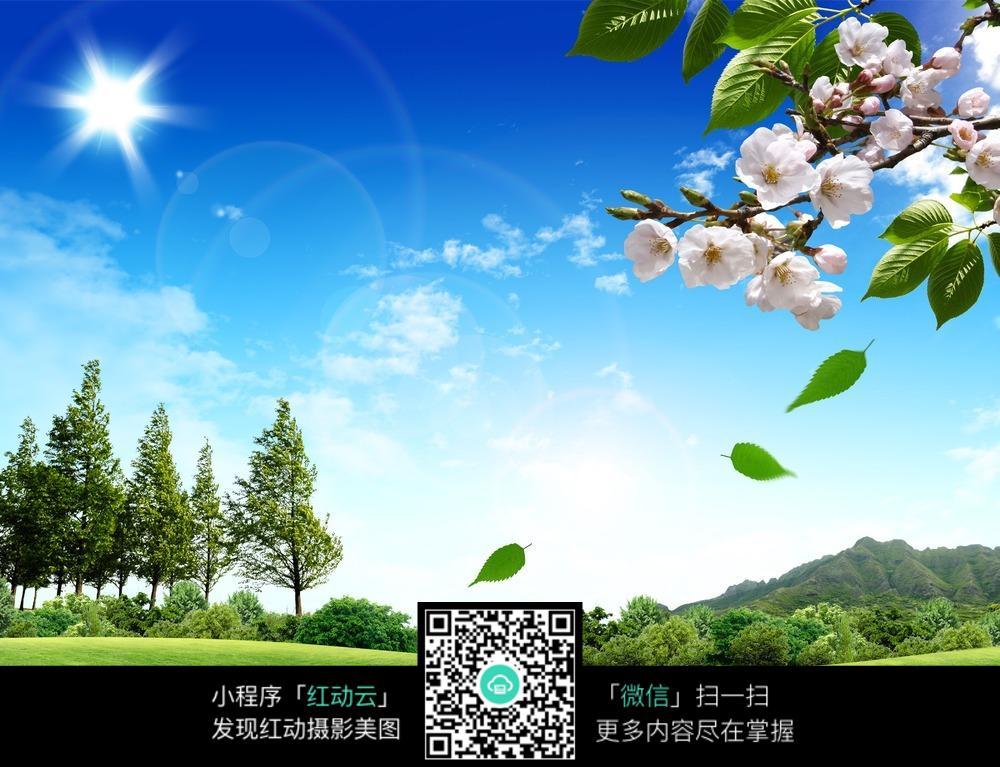 蓝天白云 树林 自然背景图片