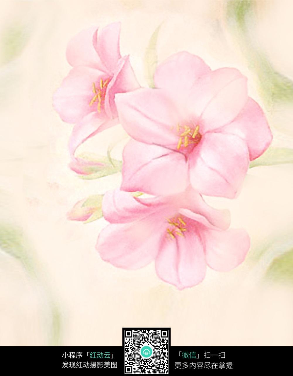 粉色小花背景图