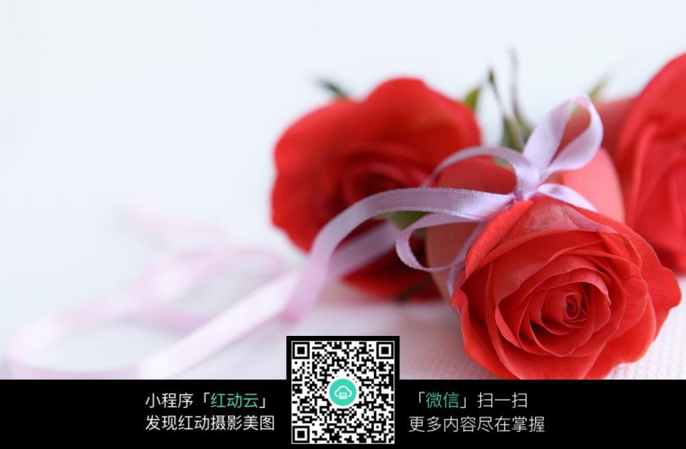 红玫瑰摄影图_风景花卉_花草_生物世界_摄影-图片风景花草玫瑰花图片