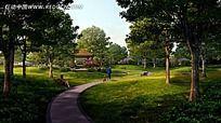 公园静谧林荫小道效果图
