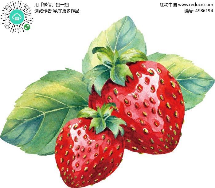 水果 水彩 水粉