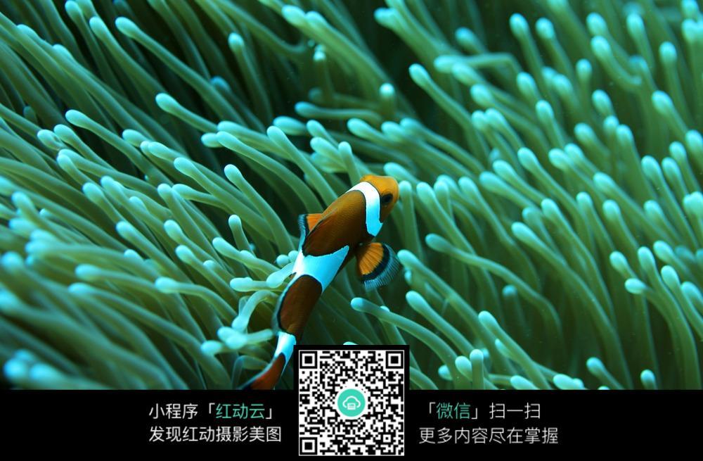 海洋中的魚高清壁紙圖片