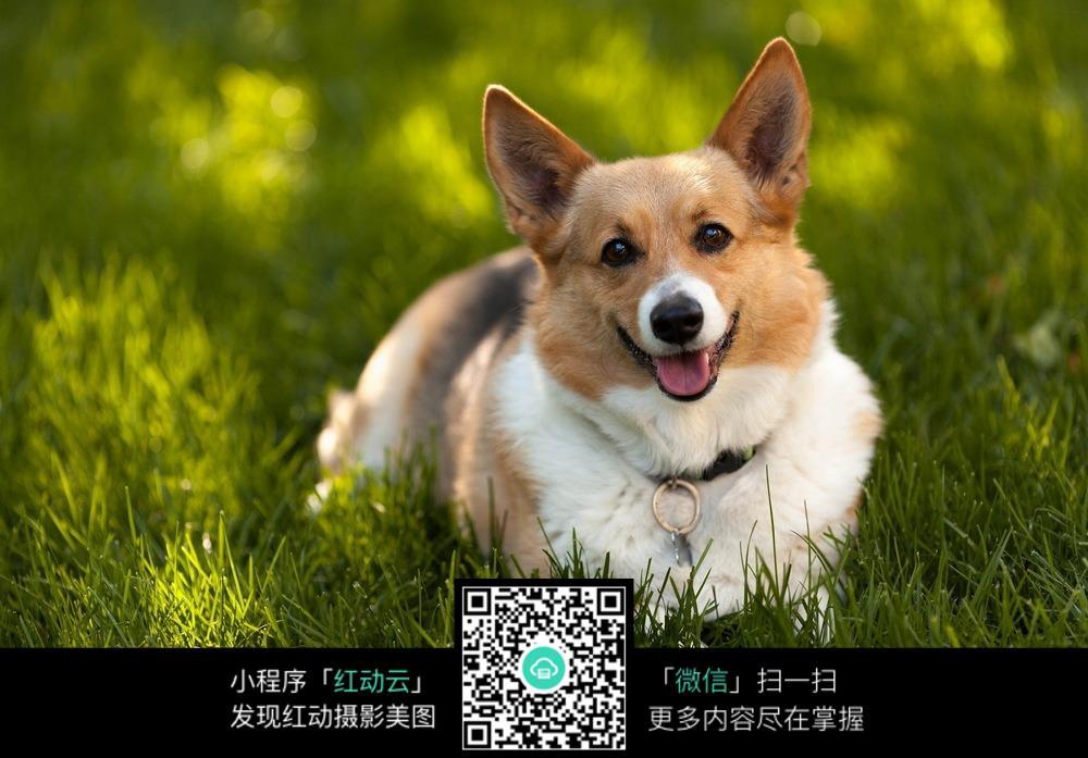 可爱狗狗图图片