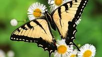 落在花朵上的蝴蝶