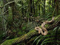 盘踞在树上的蟒蛇