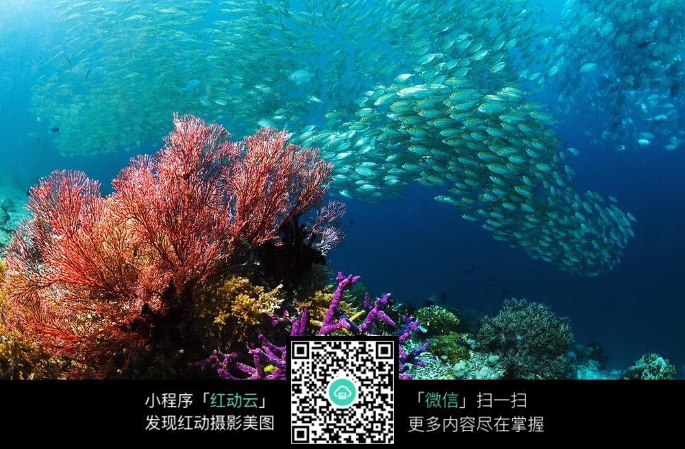漂亮的海底世界鱼群
