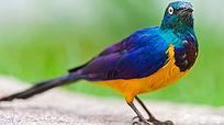 停在地上的彩色小鸟