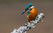 雪天树枝上小鸟
