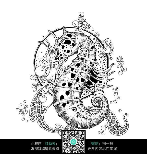 黑白花纹海马