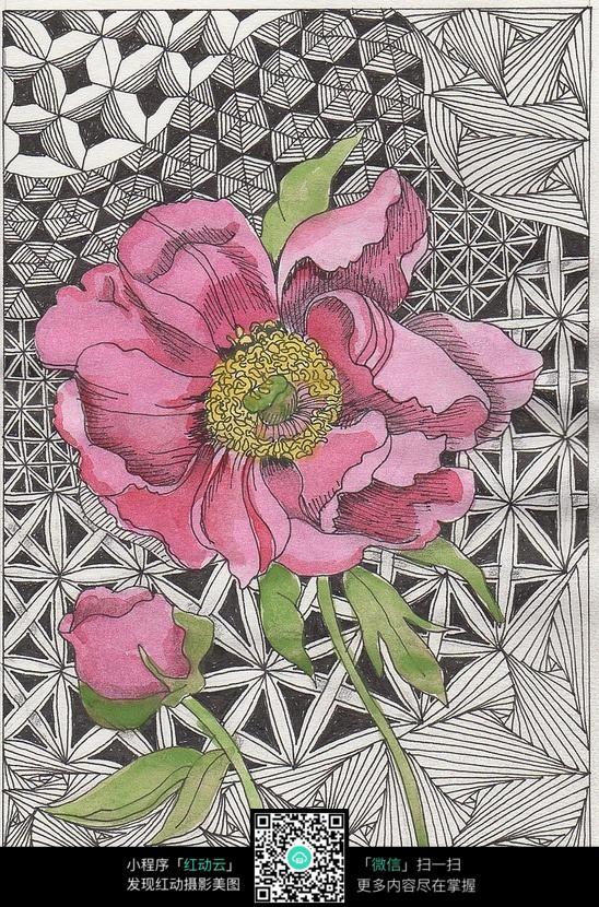 黑白图案  手绘  芍药花 花卉  花蕾  花纹  绘画
