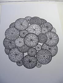 """相关""""植物花卉黑白装饰画""""327 张图片图片"""