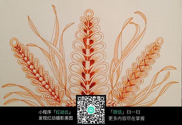 麦穗手绘插图