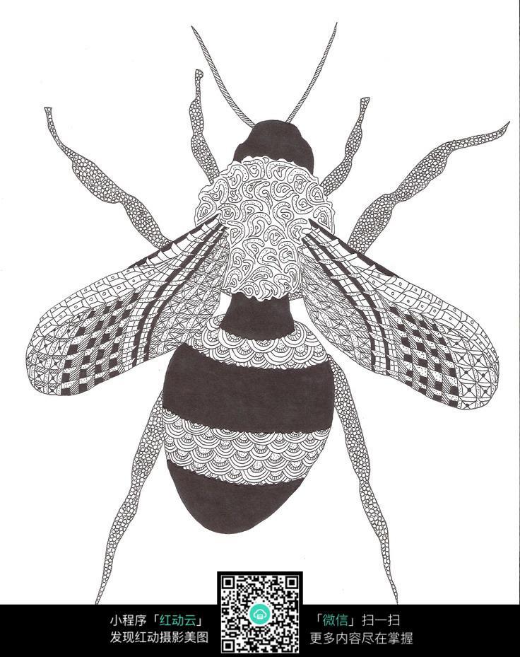 黑白花纹蜜蜂插图图片