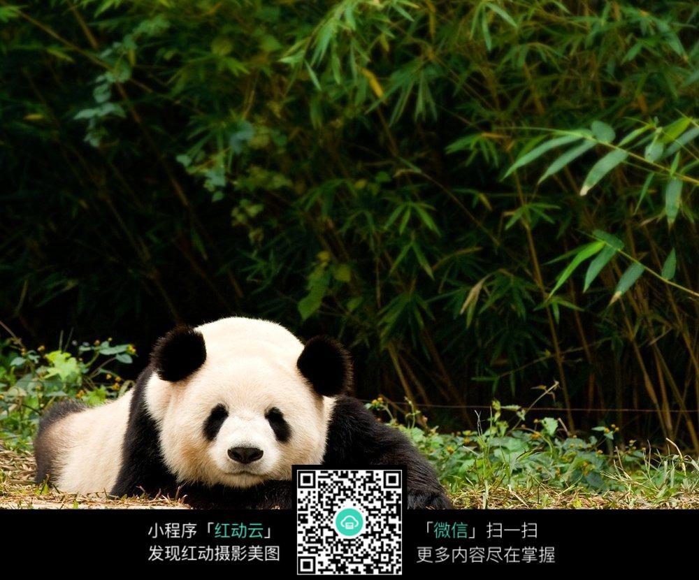 树林里的大熊猫铅笔画图片