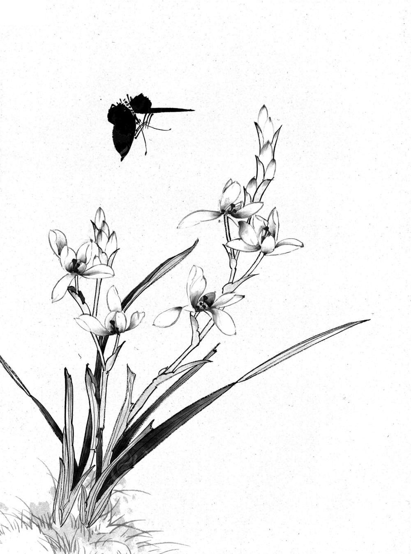 简单手绘兰花图片