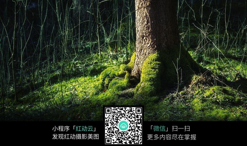树林里的老树根图片素材图片免费下载 编号5162936 红动网