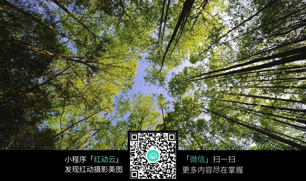 风景图片 风光  树林