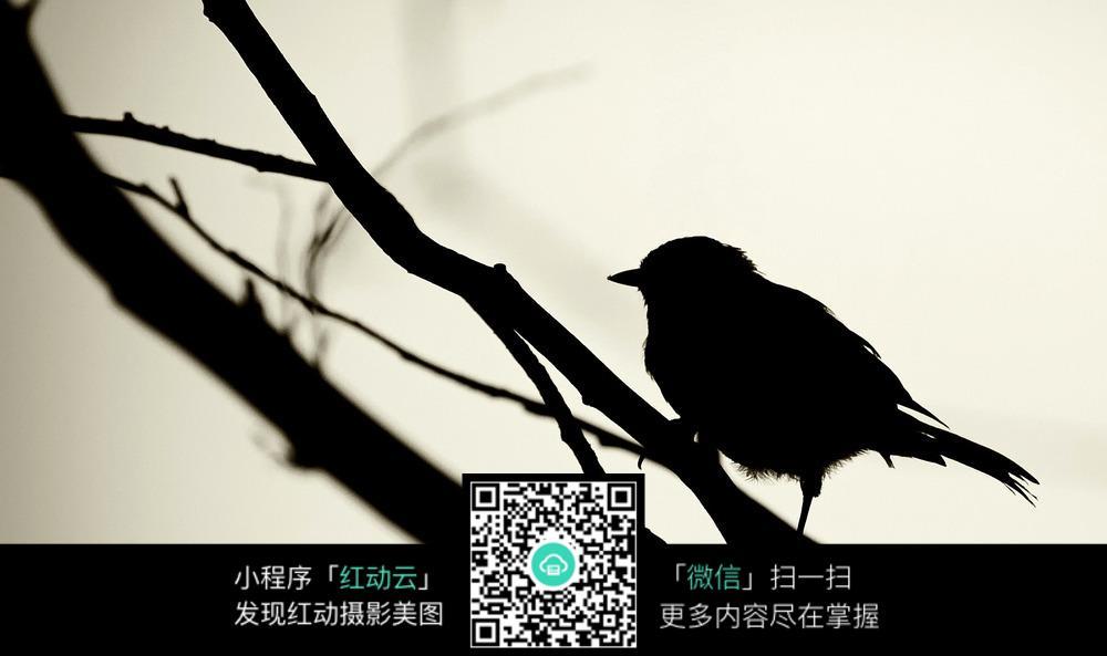 小鸟剪影图片素材
