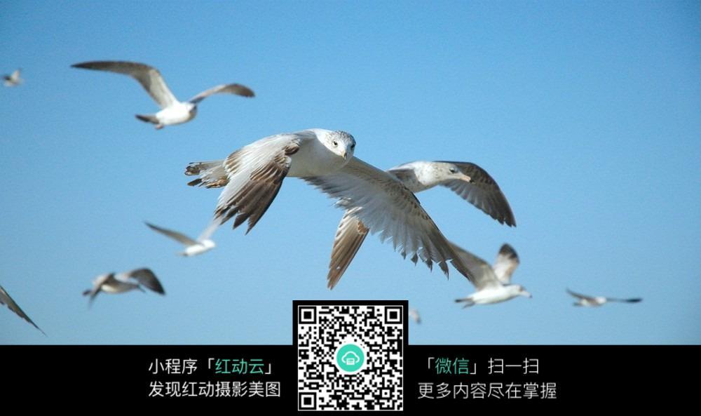 飞翔的鸟儿高清摄影图片素材