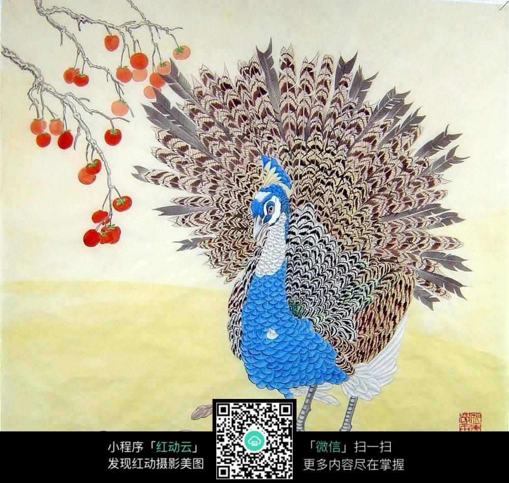 漂亮的孔雀开屏图片免费下载 编号5171390 红动网