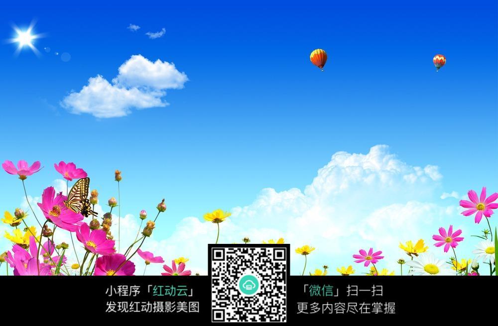 热气球与花朵风景高清摄影图片素材