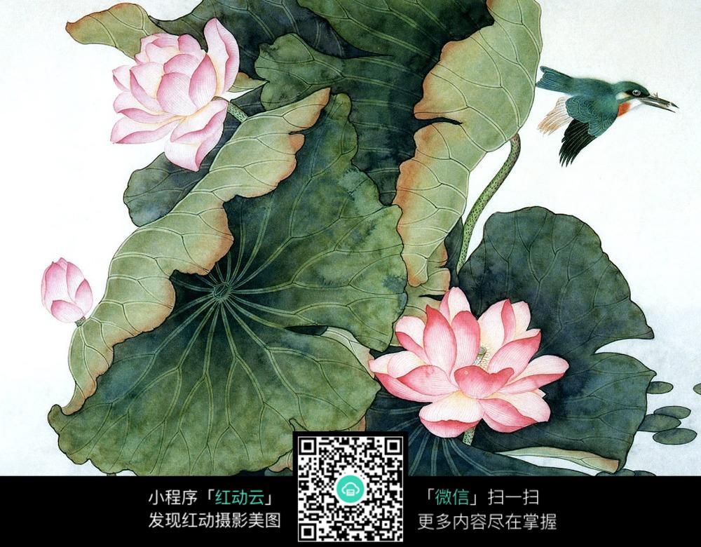 花卉 工笔画 白描 梅花展示