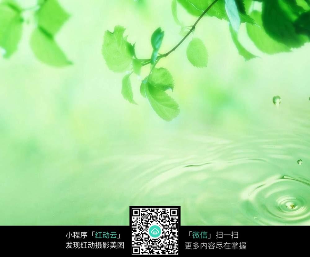 护眼绿叶波纹桌面_花草树木图片