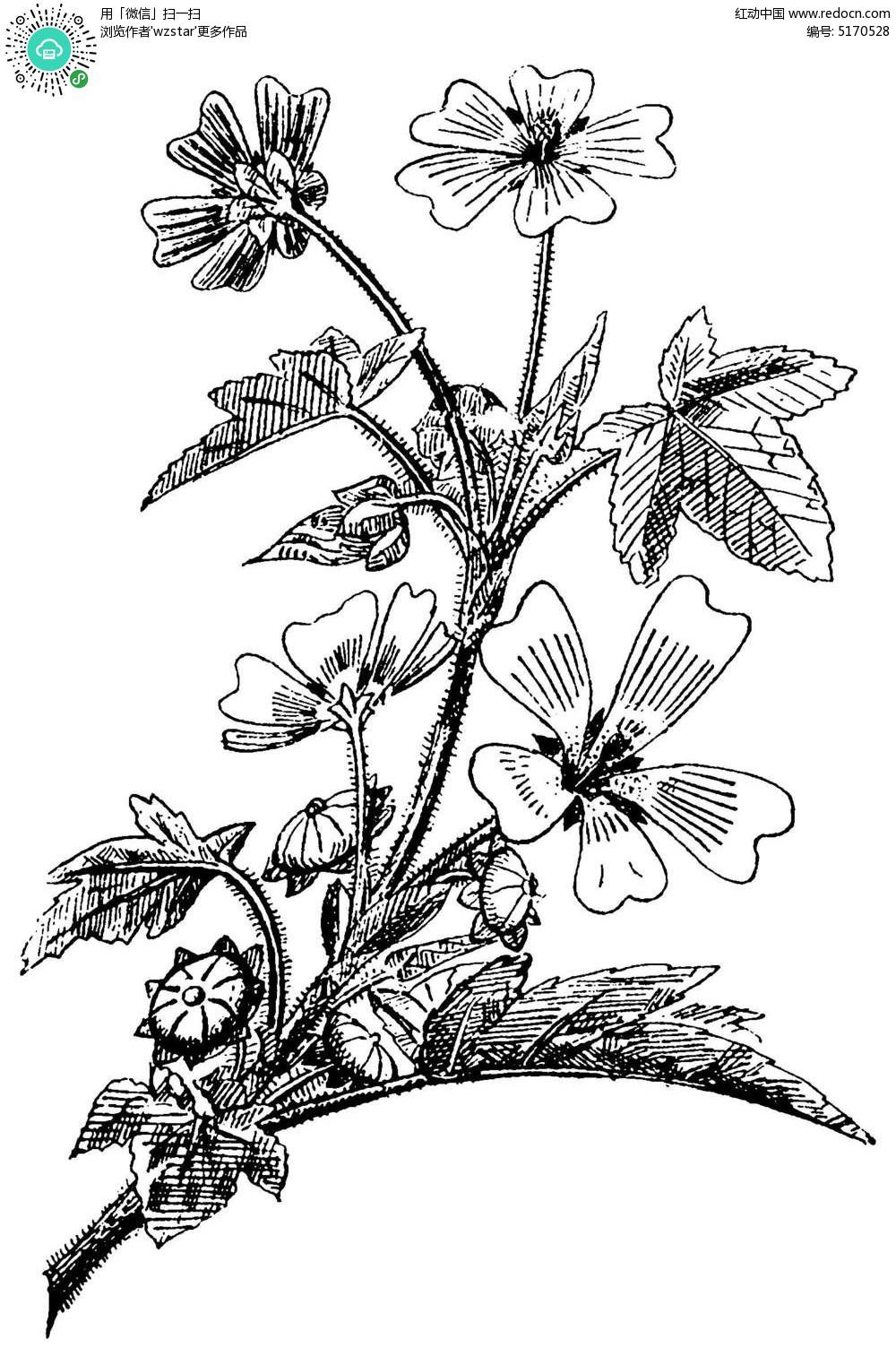 精美植物镂空线条纹理图案