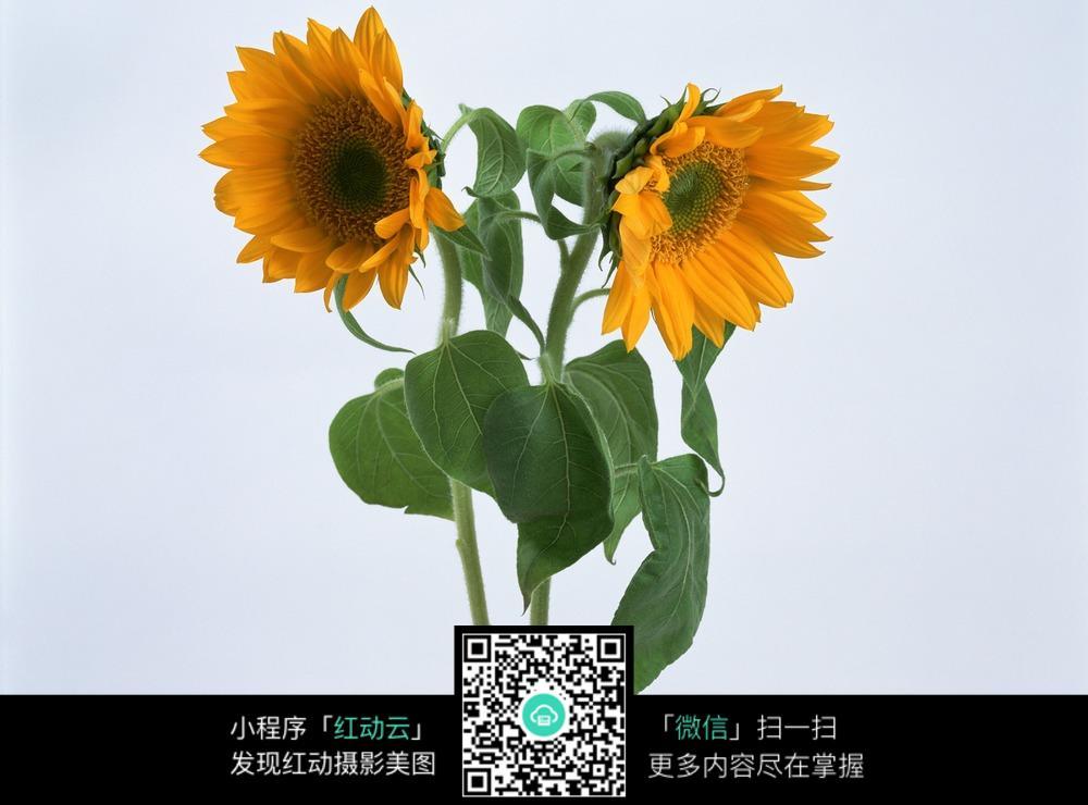 植物图片 植物 花草 花朵