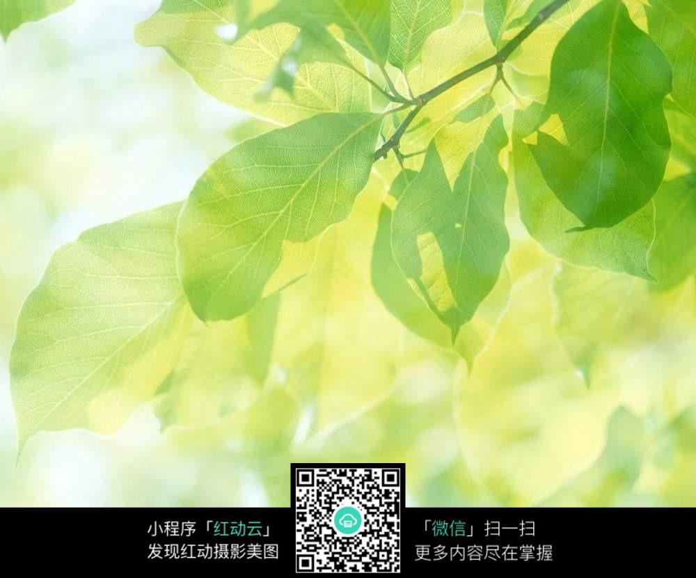阳光下的绿叶_花草树木图片