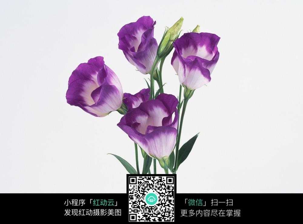紫色花朵摄影_花草树木图片