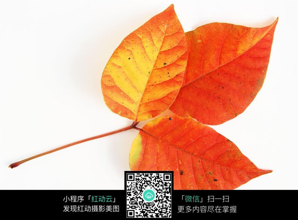 幼儿园中秋节树叶手工
