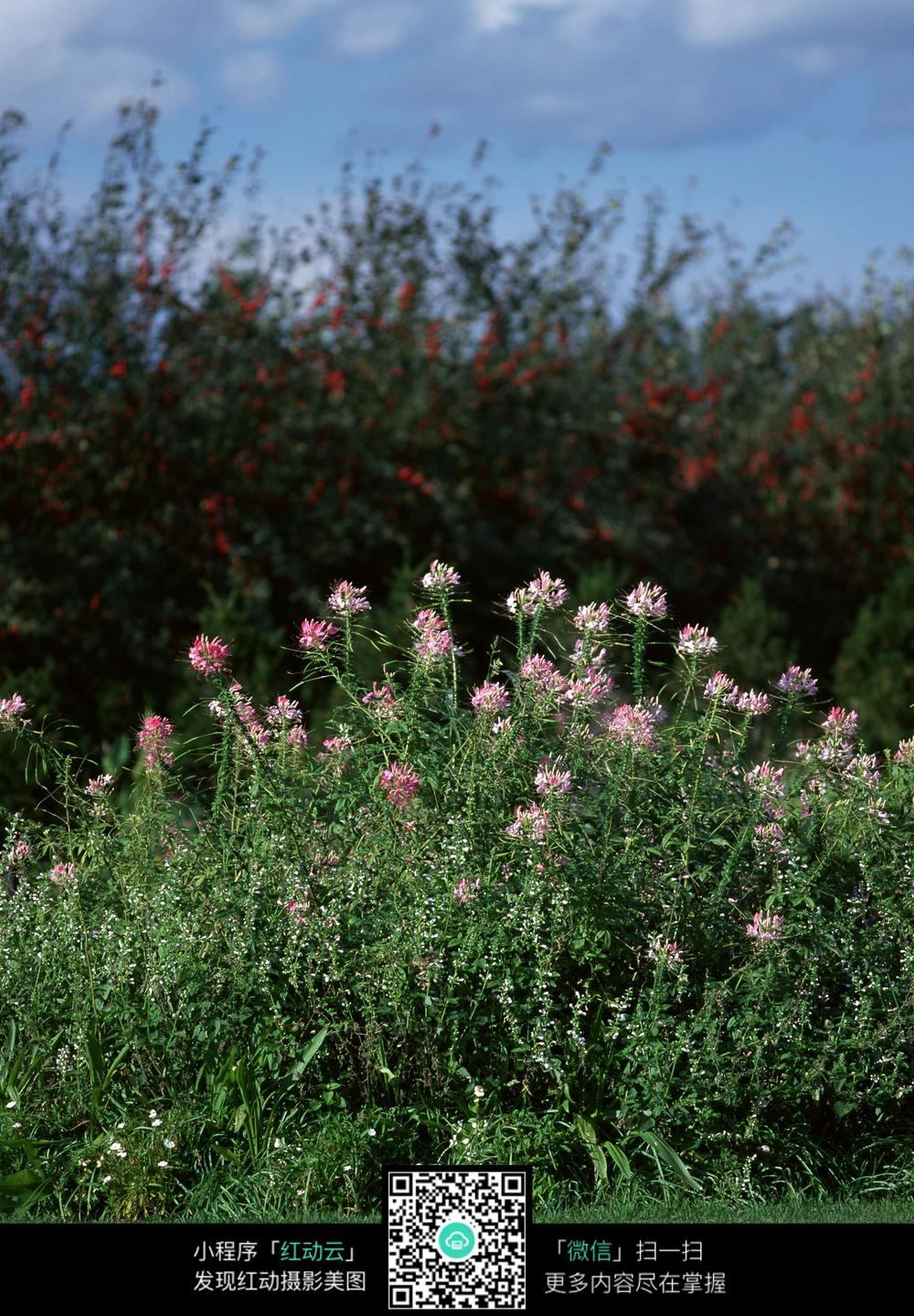 花草自然景观