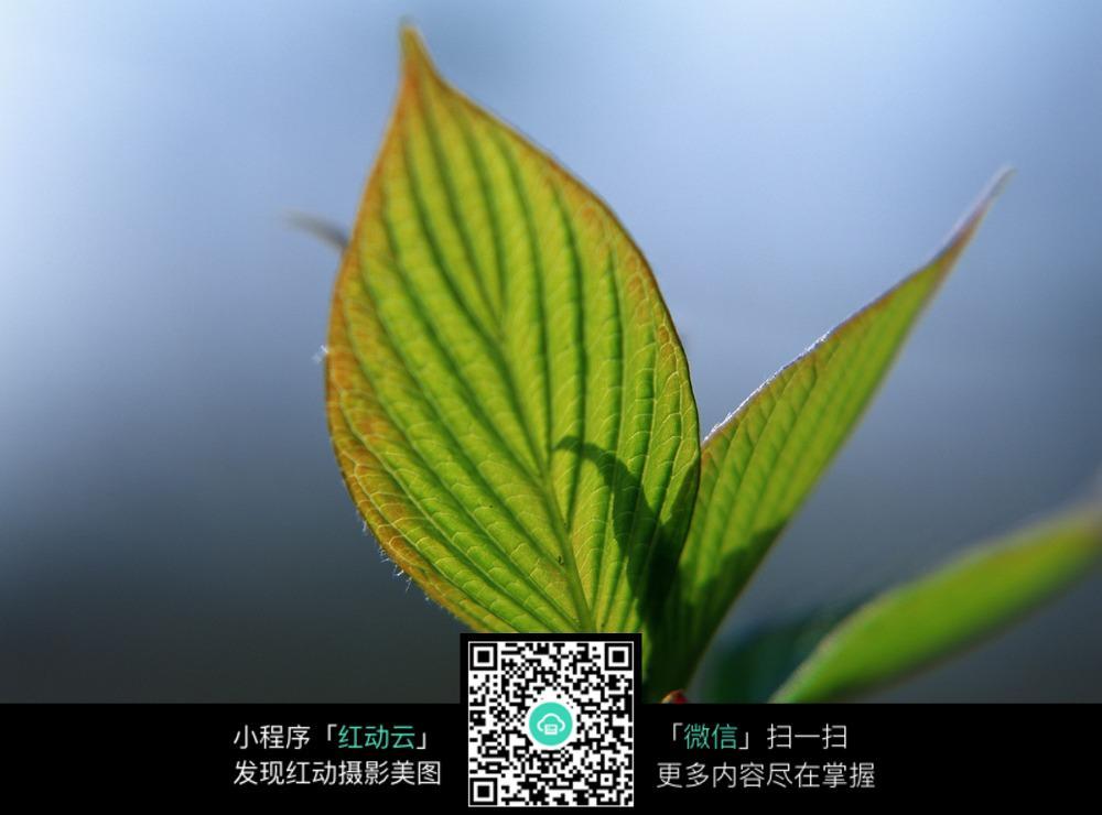 新芽 植物图片
