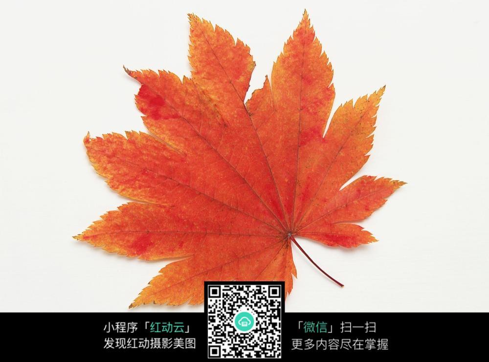 树叶怎么画_各种树叶的形状及名称_树叶简笔画_1叶子_树叶画图片大全图片