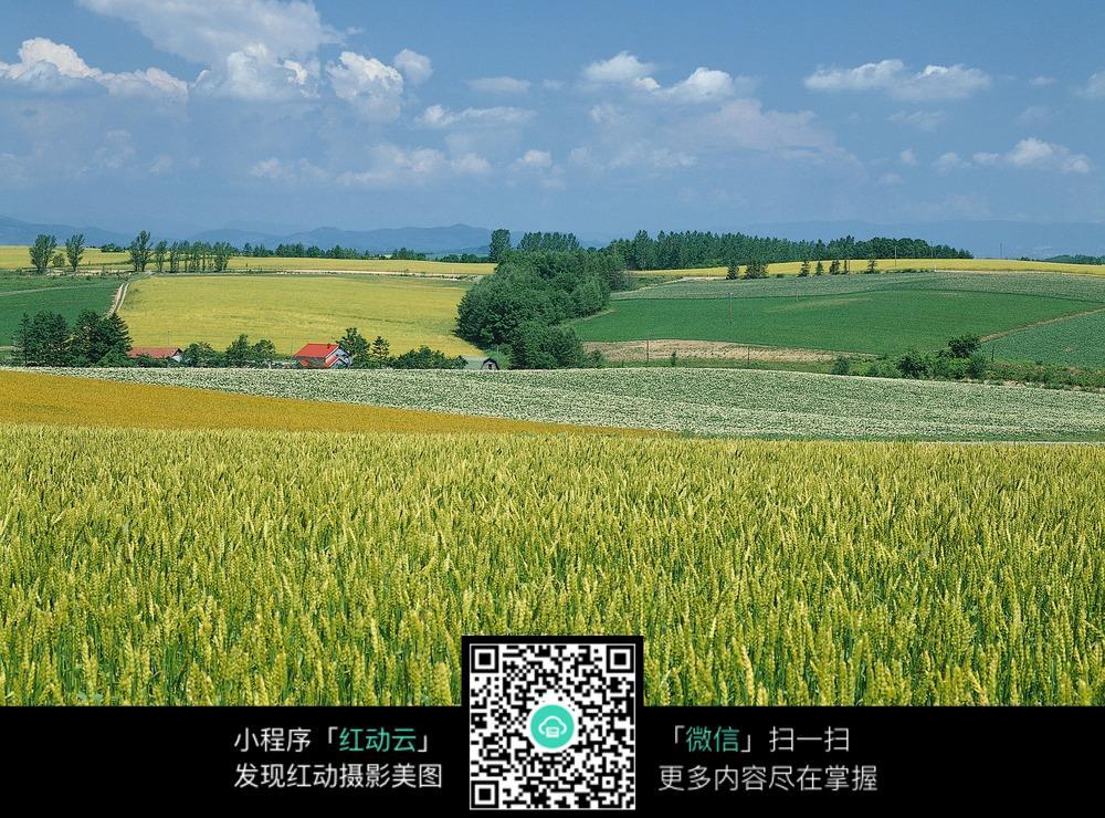 自然农田风景_花草树木图片图片