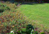 草地边的野花丛