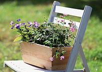 凳子上的蝴蝶兰盆景